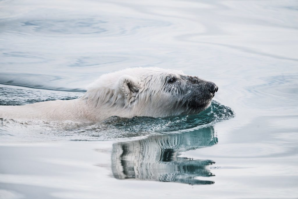 Emotive images, such as the isolated polar bear, are an important part of communicating climate catastrophe.