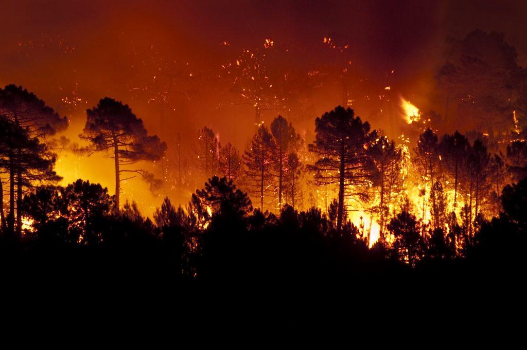 amazon is burning - header image