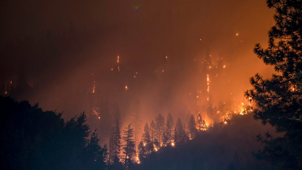 amazon is burning - body image 1 - forest on fire