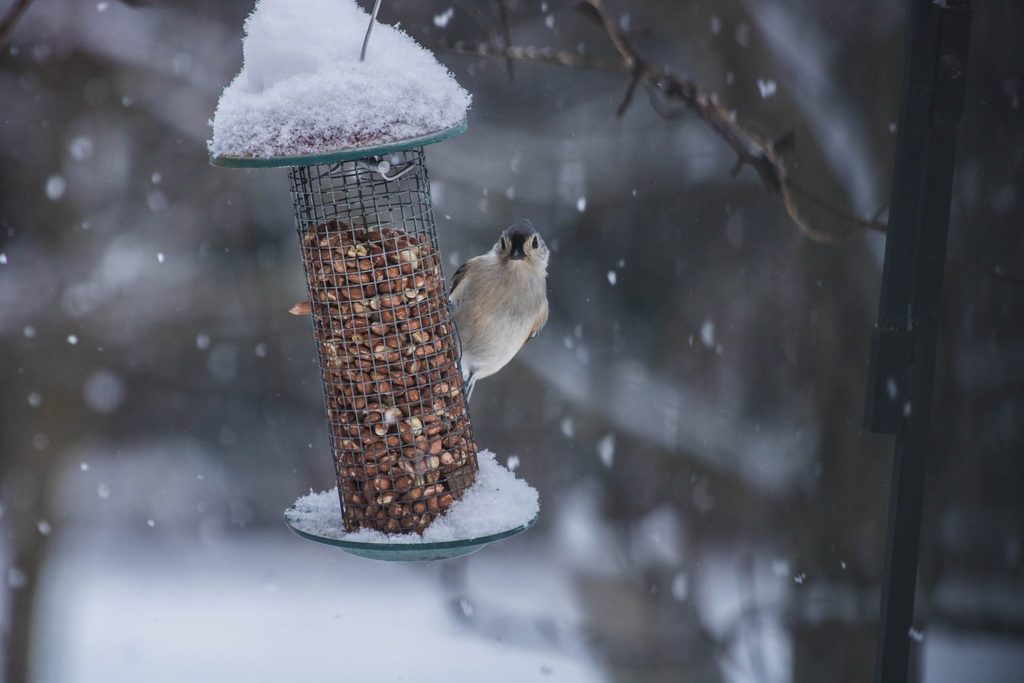 reconnect with sustainability - body image 3 - bird on feeder during the winter