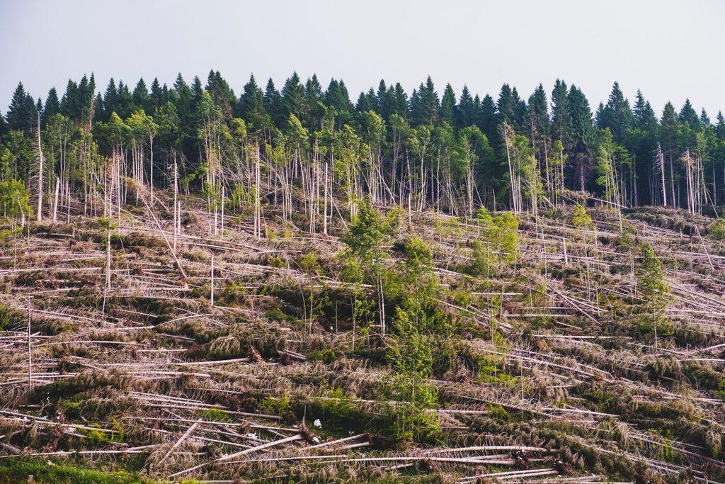 climate crisis - deforestation