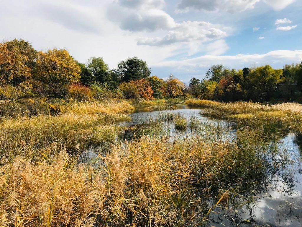 positive climate action wetlands