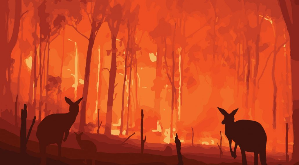 australia wildfire taking animals homes
