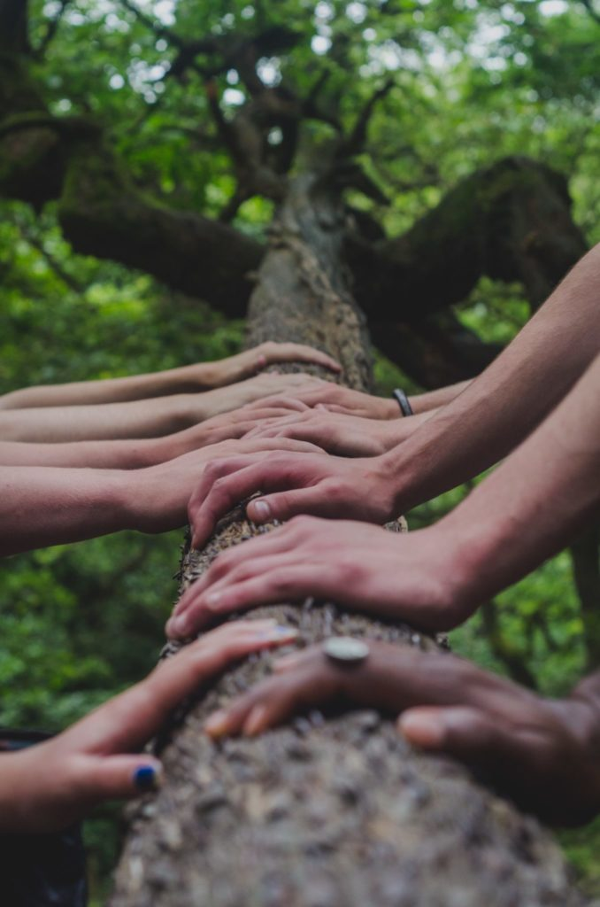 hands on a tree stump demonstrating collaboration around the united nations sustainable development goals